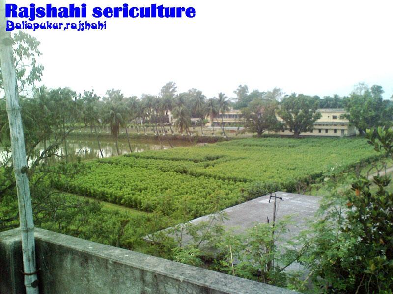 Bangladesh Sericulture Board