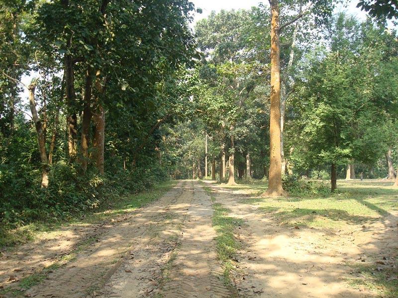 Travel to Bangladesh Modhupur Picnic Spot