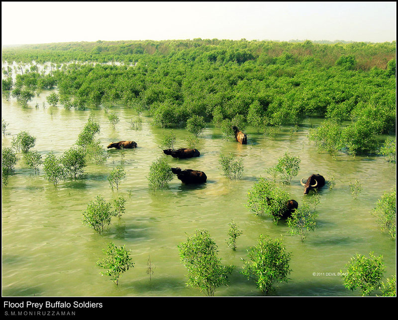 Travel to Bangladesh Moheshkhali Island