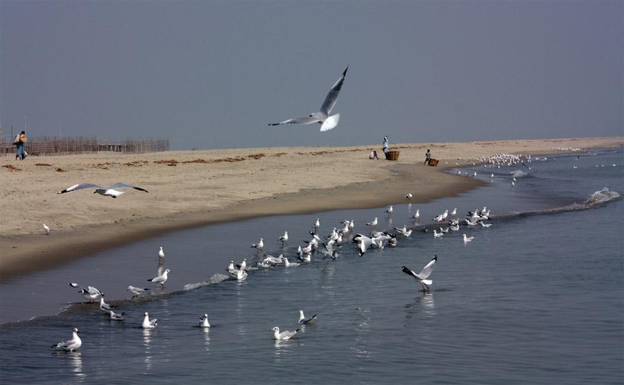 Travel to Bangladesh Sonadia Island