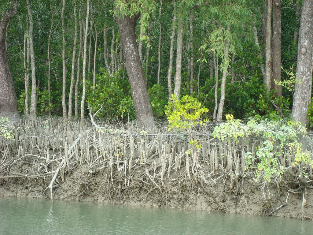 Travel to Bangladesh Sundarban