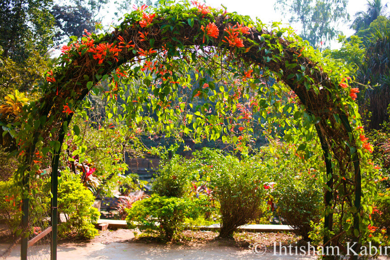 Travel to Bangladesh Baldha Garden